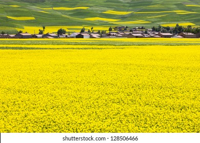 rural landscape - a village located at rape field