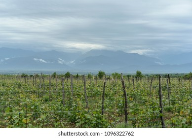 Rural landscape with vineyard and mountain horizon.