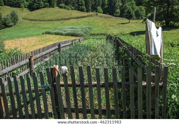 Rural Landscape Wood Old Fence Silhouette Stock Photo Edit Now