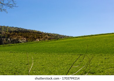 Rural landscape. Young cereals in the field. Green wheat. A field under the blue sky. Spring in the countryside. Farmlands. Agriculture in Germany. Organic crops.
