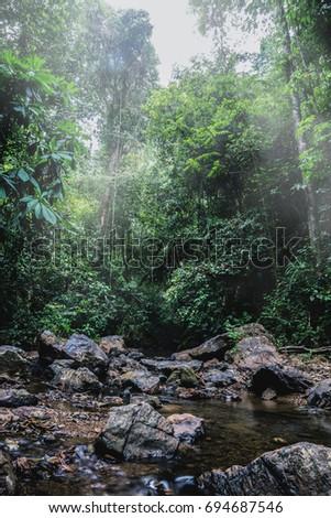 rainy season in the tropics