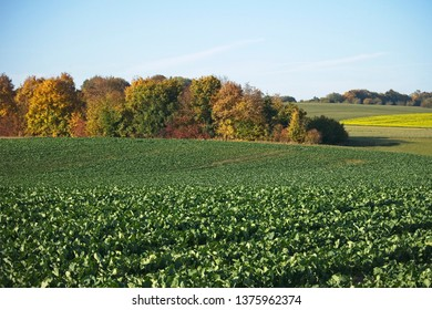 Rural lanscape with crops and autumn coloured trees