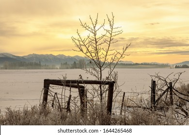 rural Montana winter morning with colorful sky and fence posts and small tree in foreground