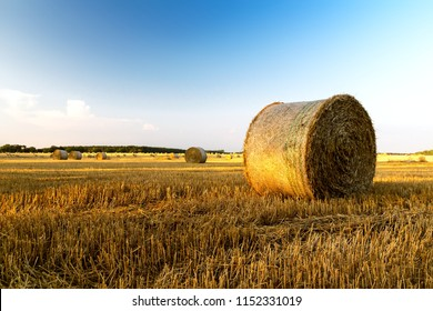 Rural morning landscape with golden straw bales and blue sky