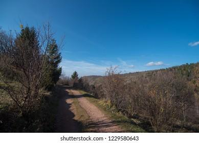 Rural mud road  near forest
