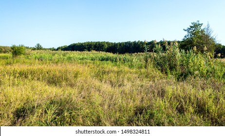 Rural nature landscape with steppe grass in the foreground