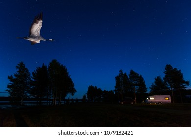 RURAL NORRLAND, SWEDEN ON SEPTEMBER 21. View of a crane in flight. Caravan and car in the night on September 21, 2017 in rural county, Sweden.