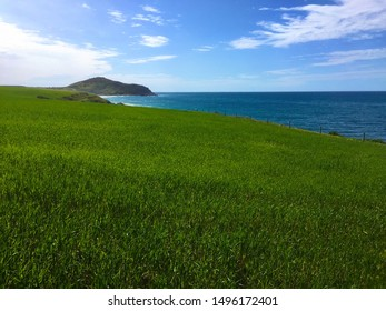 Rural pasture on coast with green grass and blue ocean on a sunny day