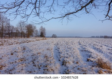 rural path, fields covered with snow, trees; beautiful winter day with countryside