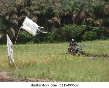 Rural picture taken near cove village in benin, Africa. View of the irrigated perimeter used to cultivate rice. Farmer working with a cultivator in a field. Agricultural activities. March, 15, 2013.