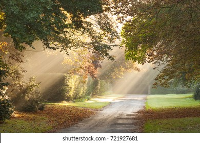 Rural public road with shafts of morning light in the autumn mist or fog. Located in England. Trees and hedges and grass surround the road.