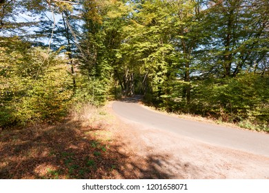 Rural road in the autumn forest. Autumn landscape