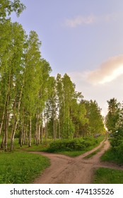 Rural road in birch grove Sunny day in  summer