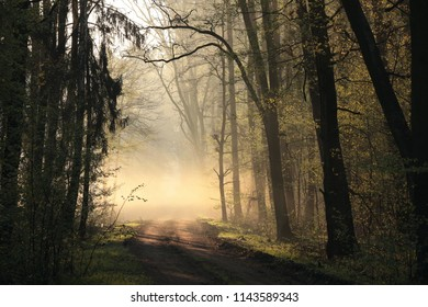Rural road in early spring forest at dawn. April, Poland.