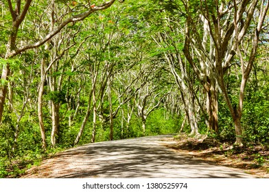 Rural road flanked by tropical trees - Siquijor Island,  Philippines