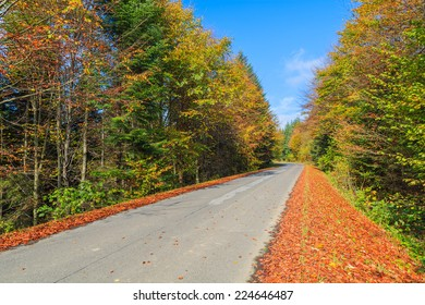 Rural road in forest on sunny autumn day, Beskid Niski Mountains, Poland