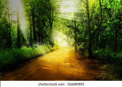 rural road and green forest with ray light in dramatic tone