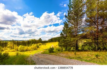Rural road in nature forest landscape. Forest road nature landscape. Nature rural road view. Rural forest road landscape