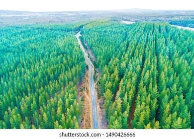 Rural road passing through pine trees forest in Melbourne, Australia