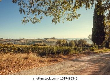 Rural road past grapeyards of Italy. Countryside with vineyard and Tuscany ripe wine grapes.