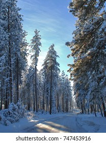 Rural road path through a forest covered in snow and ice with sunny blue sky