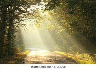 Rural road running through the autumn deciduous forest at dawn.