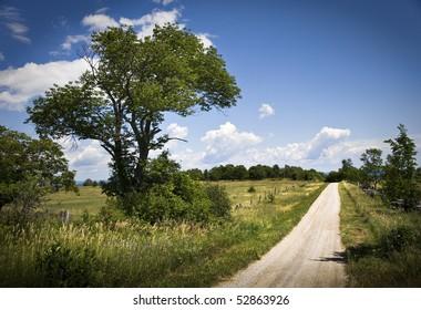Rural Road In Summer