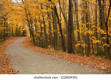 Rural road surround by yellow trees during a nice and sunny autumn day