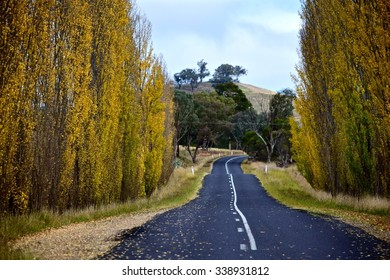 Rural road with tall trees during autumn