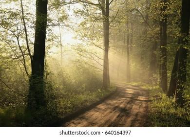 Rural road through a foggy spring forest.
