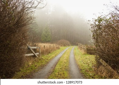 Rural Road. A welcoming driveway on an island in the Puget Sound area of Western Washington, USA. The foggy morning adds to the atmosphere of a winter day.