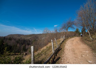 rural road and wooden fence near forest