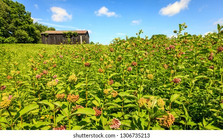 Rural scene with a barn and wildflowers in Central Kentucky in summer