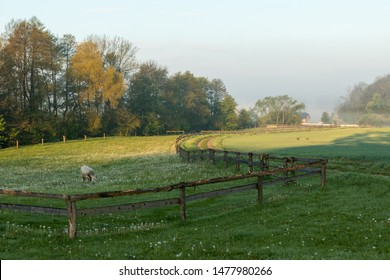 A rural scene with a cow having breakfast in fence protected area.