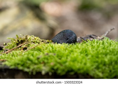 Rural scene in a forest of a snail hiding among the moss of an old tree stump