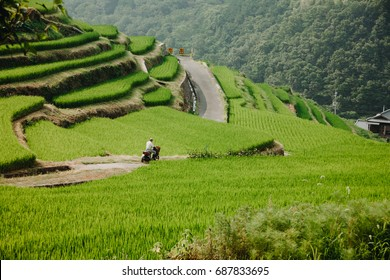 A rural scene of Japan with rice terrace paddies