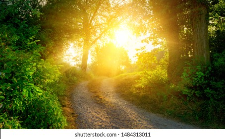 Rural scene with a path warmly illuminated by the  golden sunlight and leading to the sun
