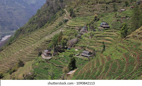 Rural scene in Taulung, Annapurna Conservation Area, Nepal. Steep hill with terraced fields and traditional Gurung houses.