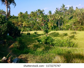 Rural Scenery Of The Farm Fields At Ringdikit Village, Buleleng, North Bali, Indonesia
