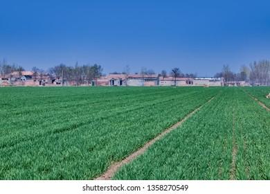 Rural scenery in Qingfeng County, Fuyang City, Henan Province