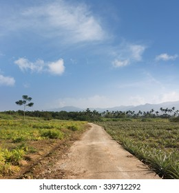 Rural scenery with road at countryside in Luye, Taitung, Taiwan, Asia.