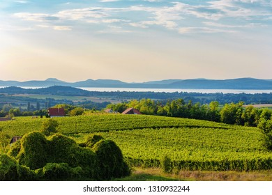 Rural scenery in sunset colors with vineyards near to Lake Balaton, Hungary