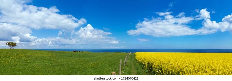 Landschaftliche Panoramalage mit blühendem Canola-Feld und dem baltischen Meer im Hintergrund