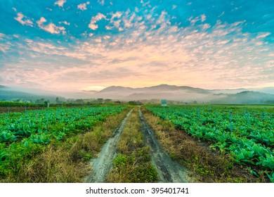 Rural soil path in green farm landscape sunrise. field and grass