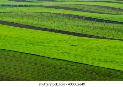 Rural spring landscape with green stripy fields and waves, South Moravia, Czech Republic, natural seasonal background