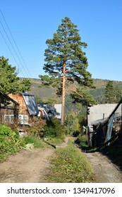 Rural Street in a Dacha or Holiday Cottage Village in East Siberia