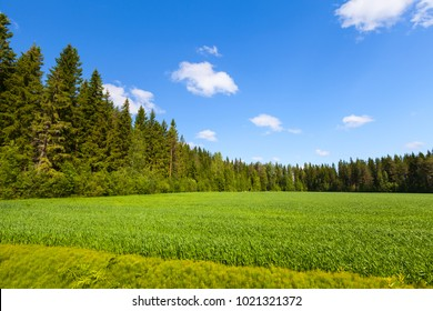 Rural summer European landscape, empty green field and forest under blue sky with clouds