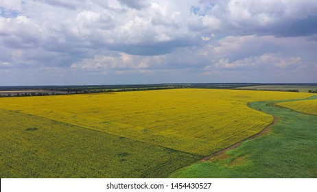 Rural summer landscape. Fields of wheat and sunflower. Aerial view.