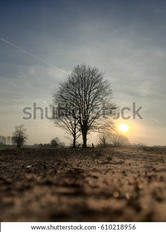 Stock photography: Best image of March 2019: Rural sunset in the countryside with the sun setting and showing behind a lonely bare tree in the field with a dusty sand road underneath a clear blue sky