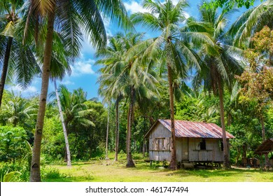 Rural tropical landscape. Bamboo hut surrounded by palm forest. Philippines.